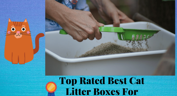 Best Cat Litter Trays For Small Appartments