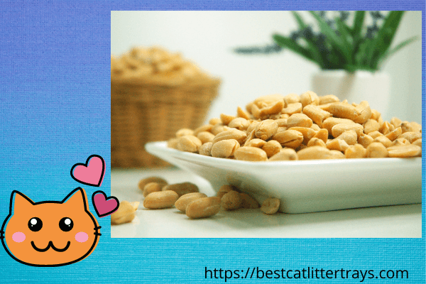 Can Cats Eat Peanuts